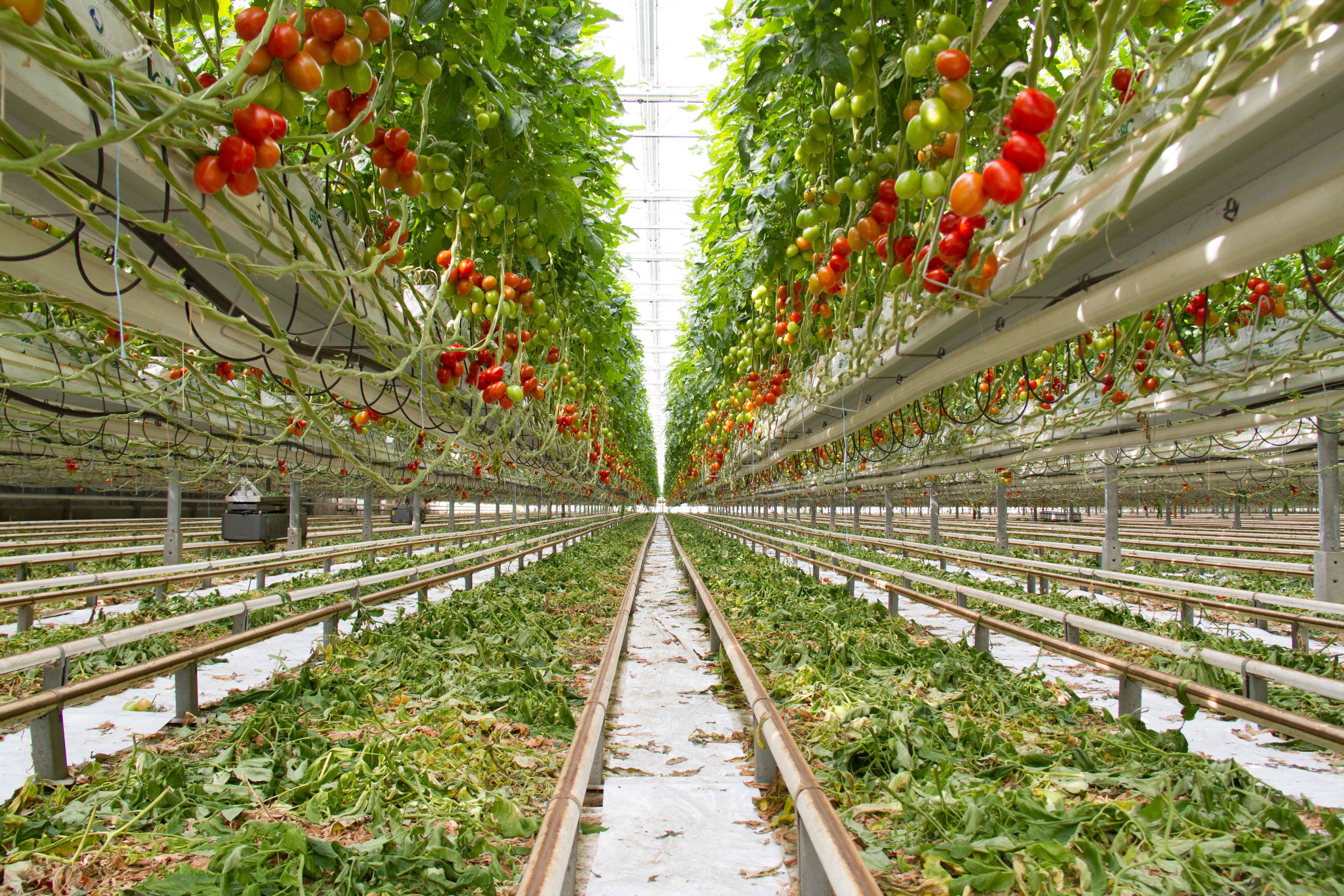 Salat pflanzen ohne erde